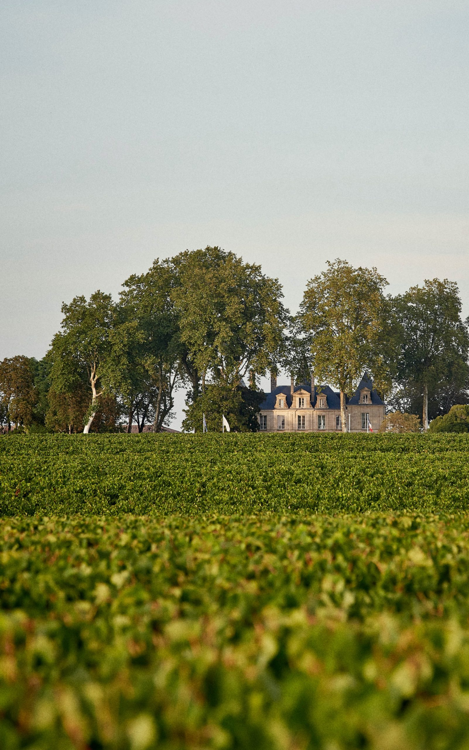 Grand vin Médoc Bordeaux